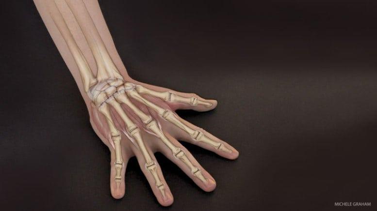 201504-yjmag-wrist-body