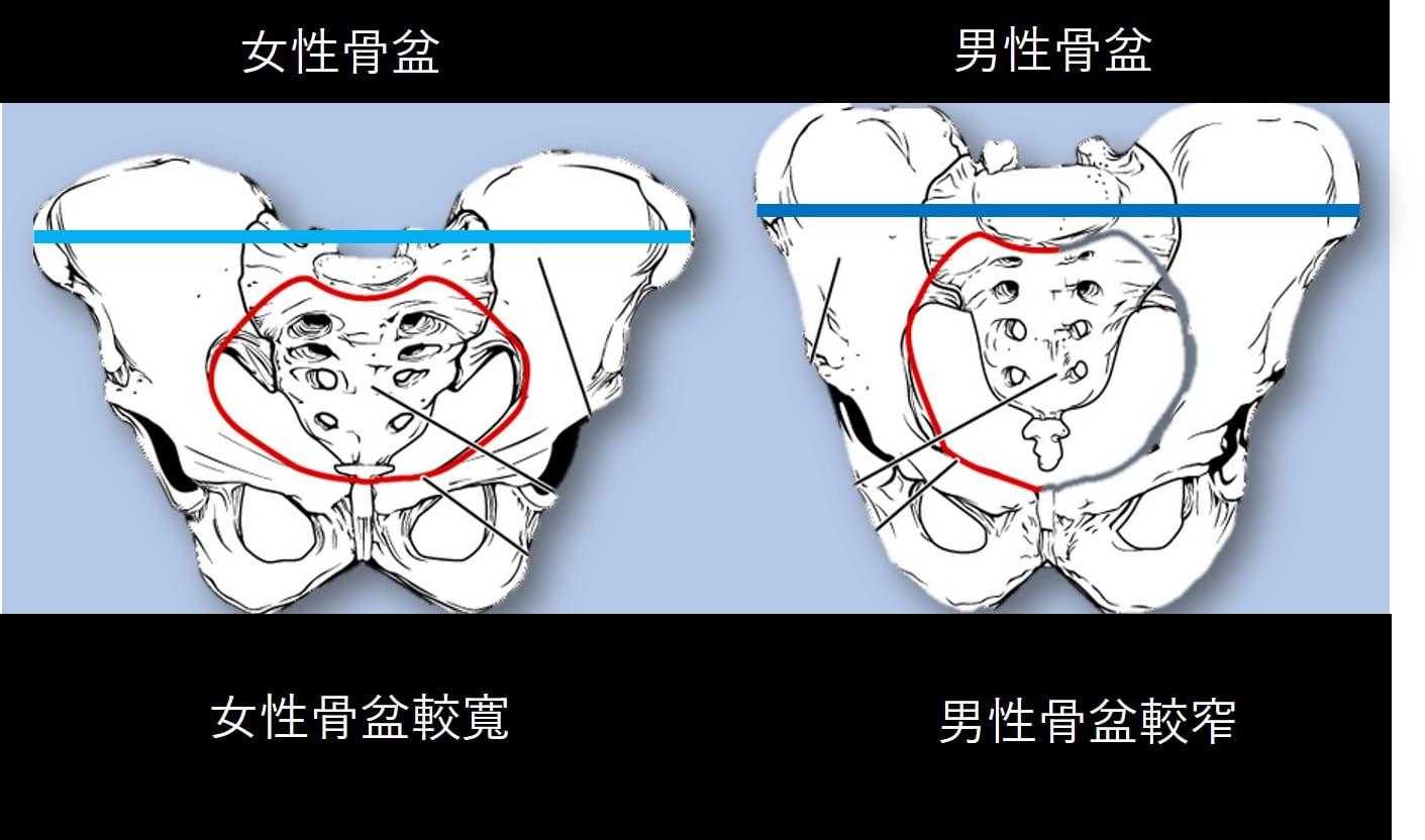 男女骨盆比較.jpg