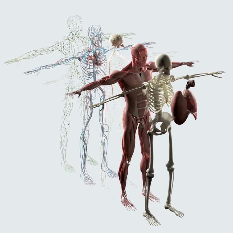 內臟.png